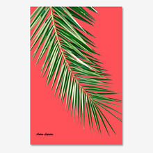 팜리프R (PalmLeaf red)